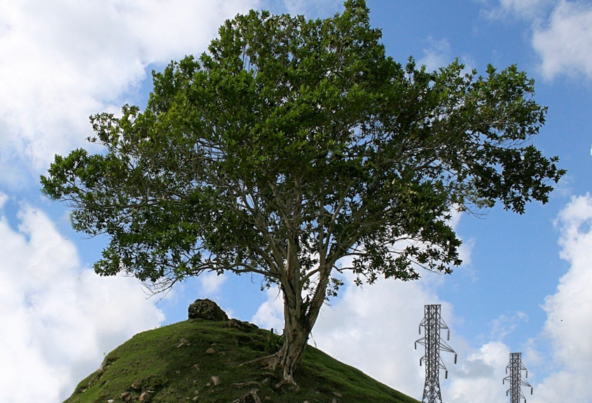 A healthy tree grows atop a lush green hill on a beautiful sunny day. Electrical transformers can be seen in far off in the distance.